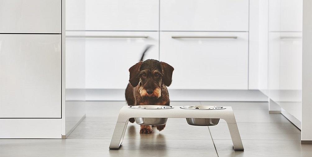 Royaume-Uni disponibilité nouveau design images officielles ▷ Le Migliori Ciotole Per Cani. Classifica E Recensione Di ...